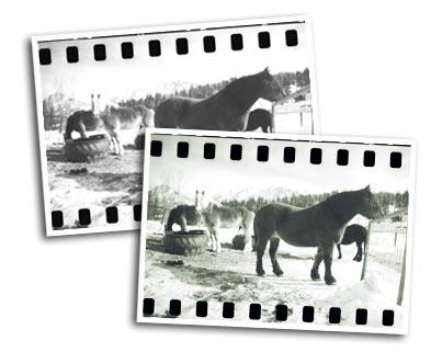black-white-prints