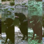 Dog-Disposable Cameras comparison
