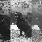 Disposable Single Use Cameras B&W Photo Comparison - Dog