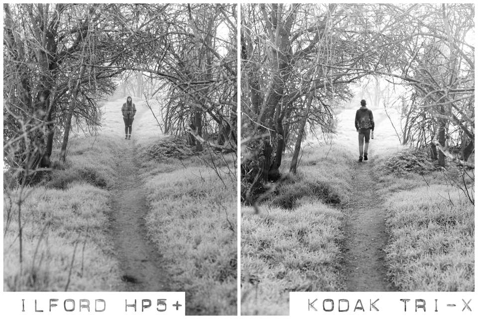 Medium format HP5 vs Tri-X