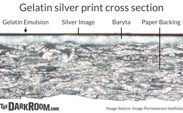 Gelatin silver print cross section