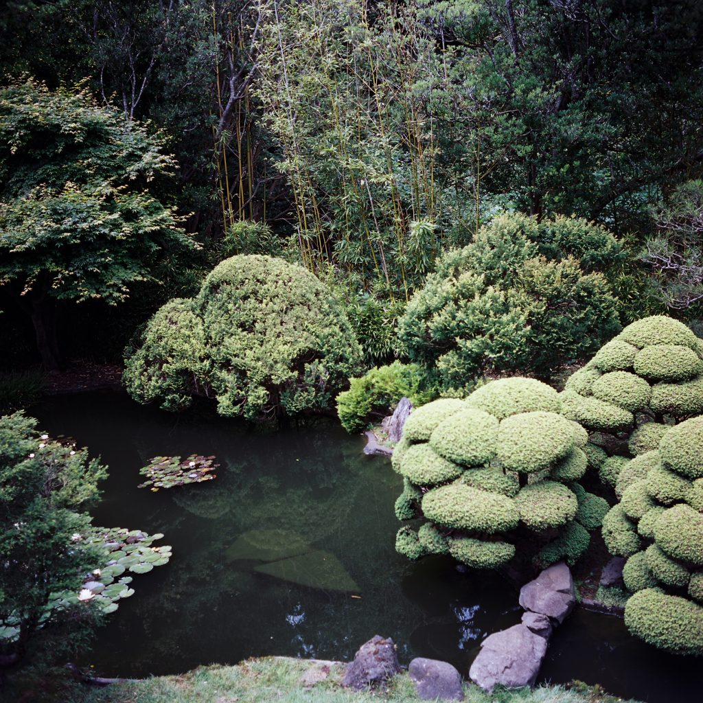 CineStill 50D 120, shot on my Rolleiflex T at the San Francisco Japanese Tea Garden