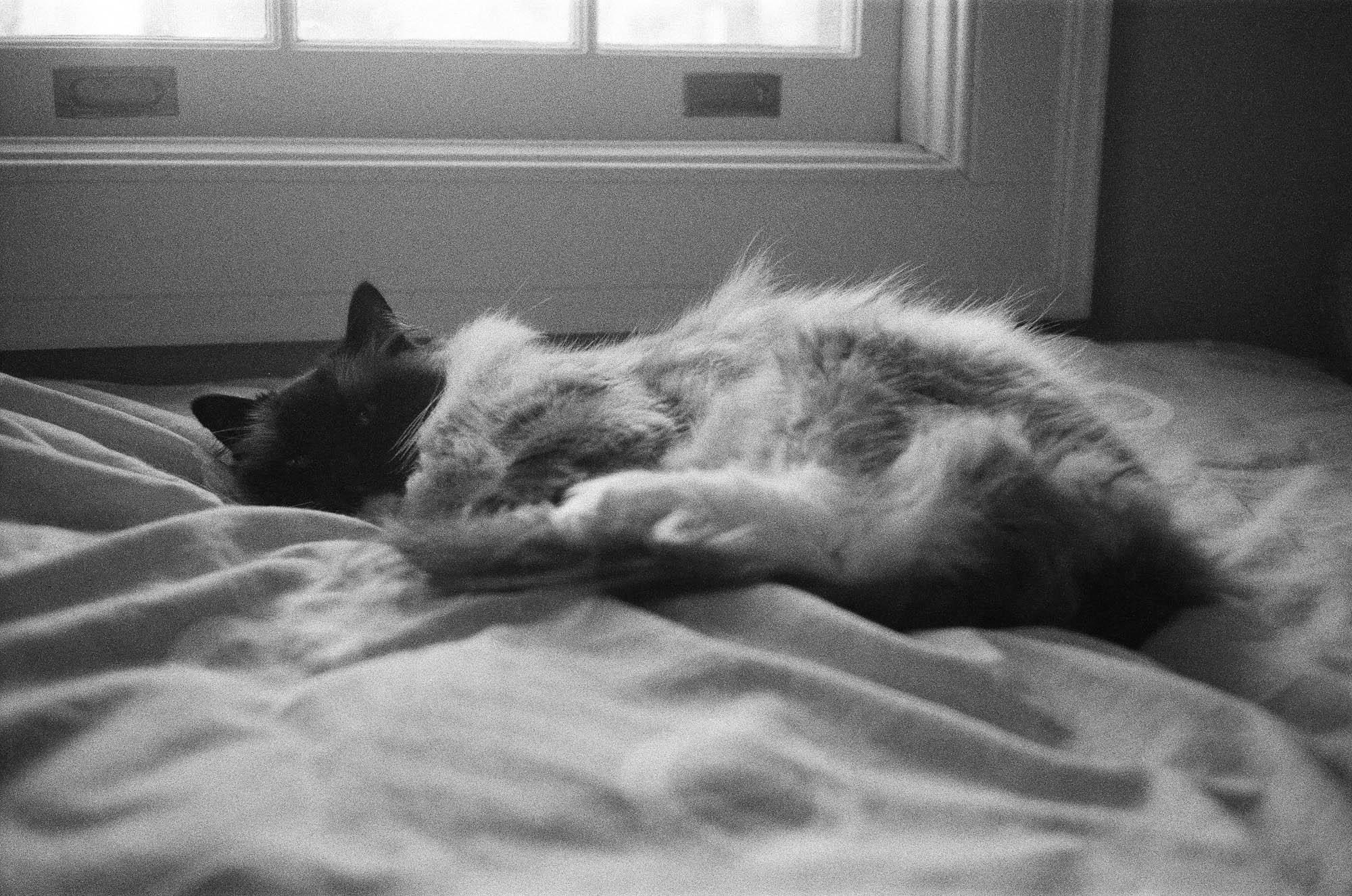 Cat nap by the window- Rollei 35 camera