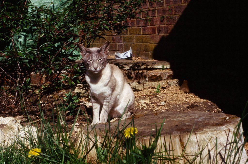 Ektachrome taken with a Leica IIIf.