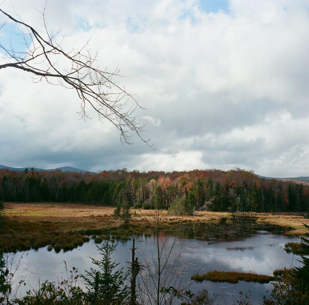 Green Mtn. National Forest Rd. 71, Somerset VT. Mamiya C22.