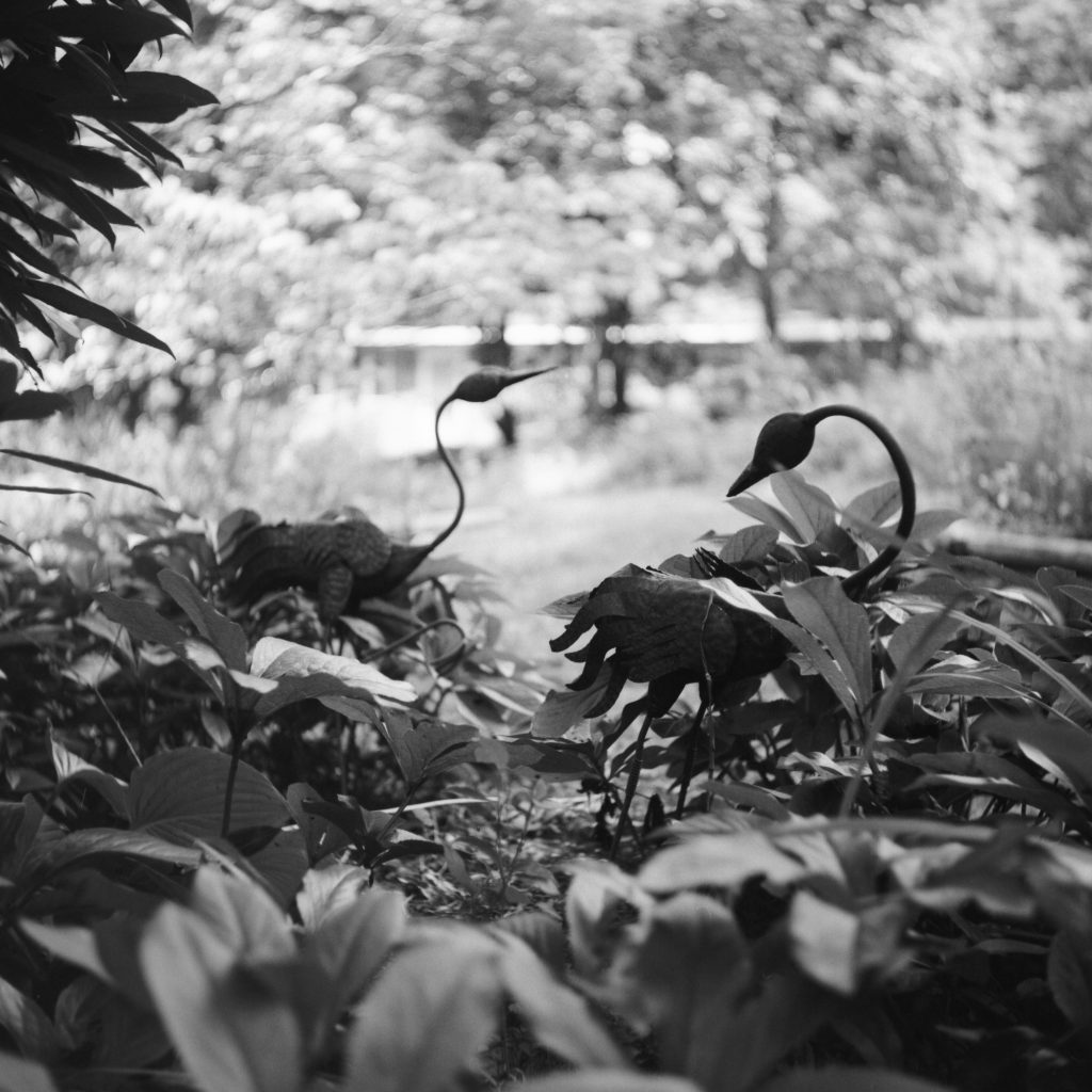 Shot with a Yashica A on Ilford Fp4+ at box speed.