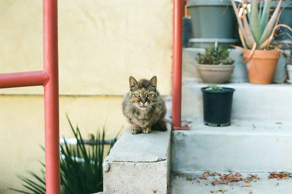 Stray cat, shot on Minolta SRT 102 with Kodak Gold 200 at box speed, developed at 200 by The Darkroom.