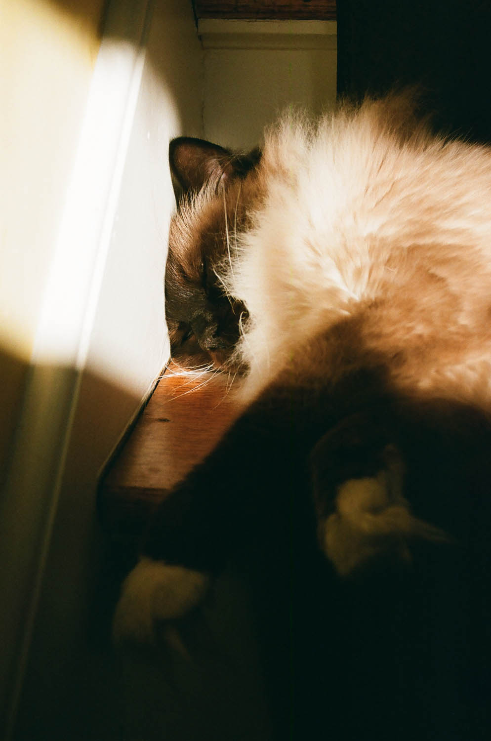 Nanaimo the cat gets some morning rays of sunlight