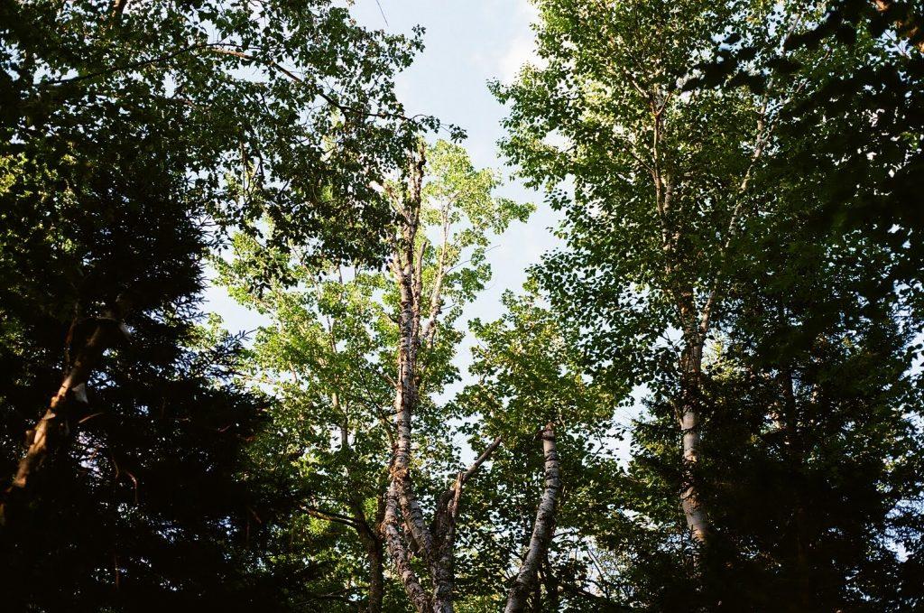 Fading light at the campsite. Canon AL1