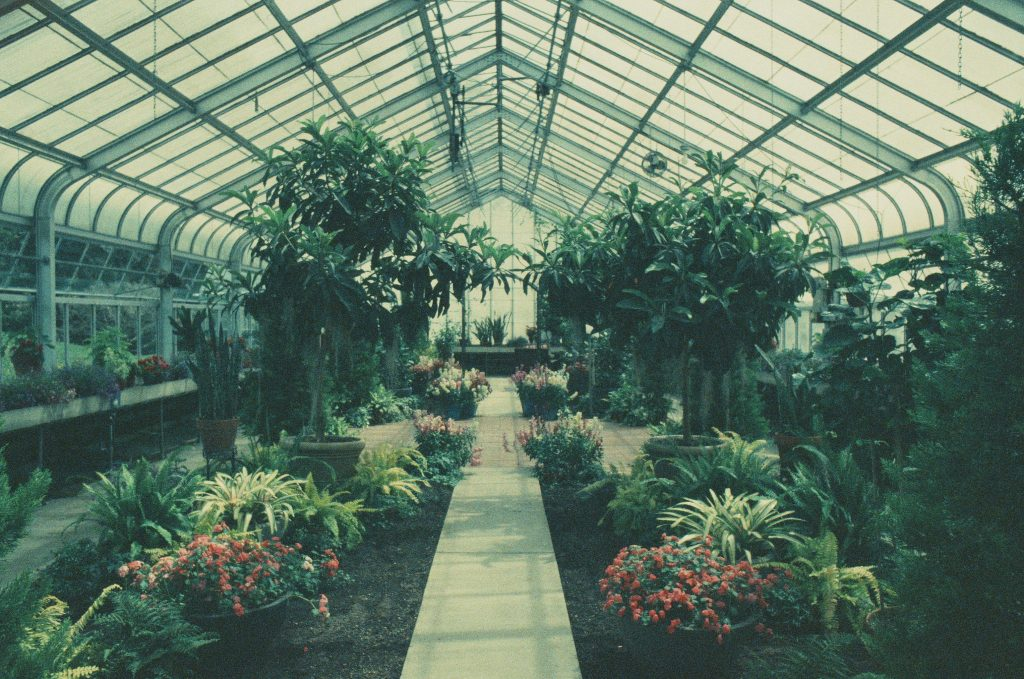 Hidden Lake Gardens Conservatory - Nikon N6006 28 mm 3.5 exposure not recorded