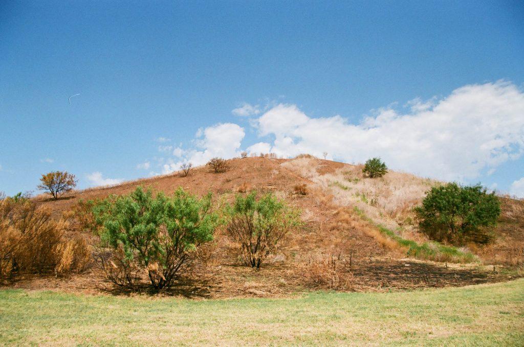 A hill near Lake Wichita in Wichita Falls, Texas. Shot at 200, developed at 320.