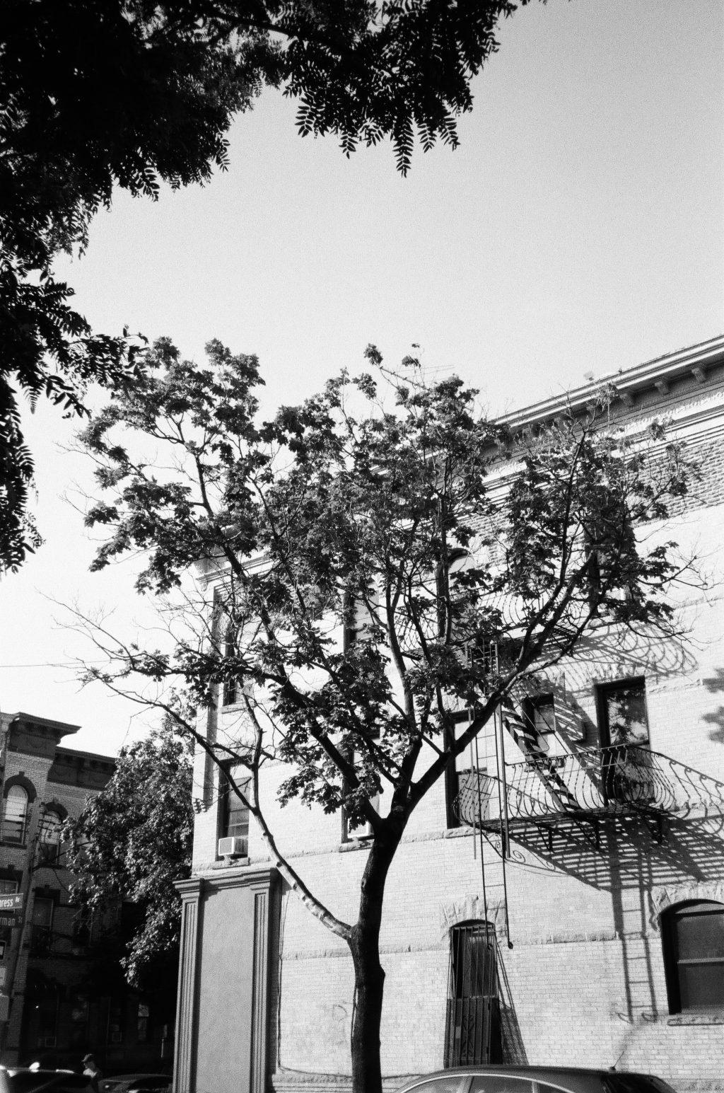 A tree grows in Brooklyn (shot on Olympus Stylus 120)