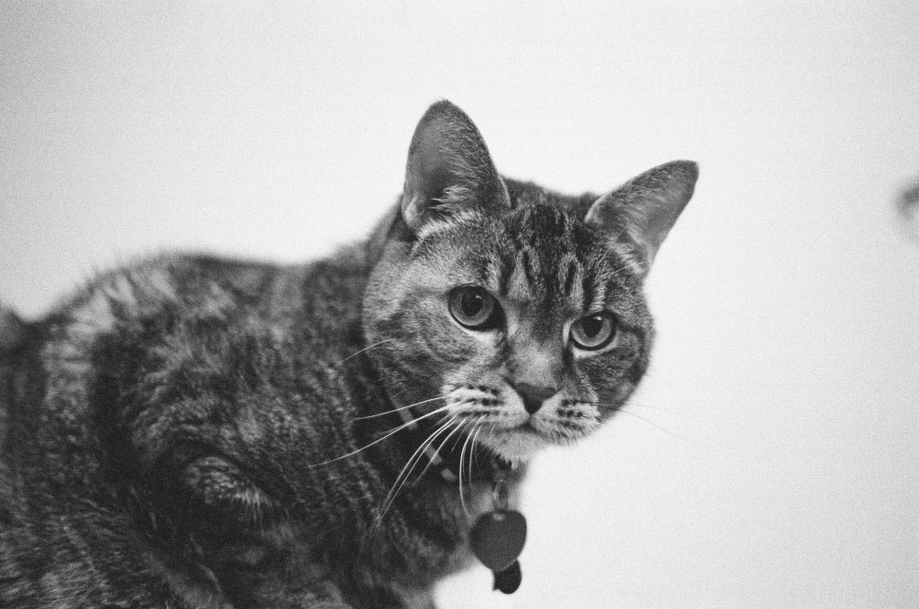 A shot of my photogenic cat. Shot at 3200, and developed at 3200 by the Darkroom.