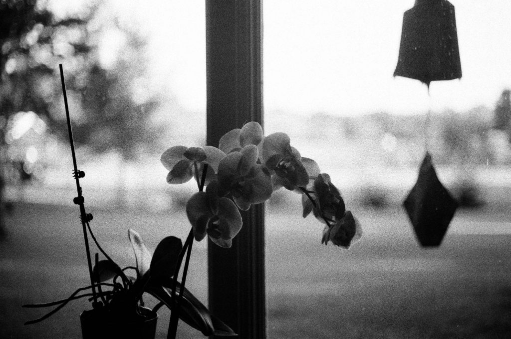An orchid. Shot at 3200, and developed at 3200 by the Darkroom.