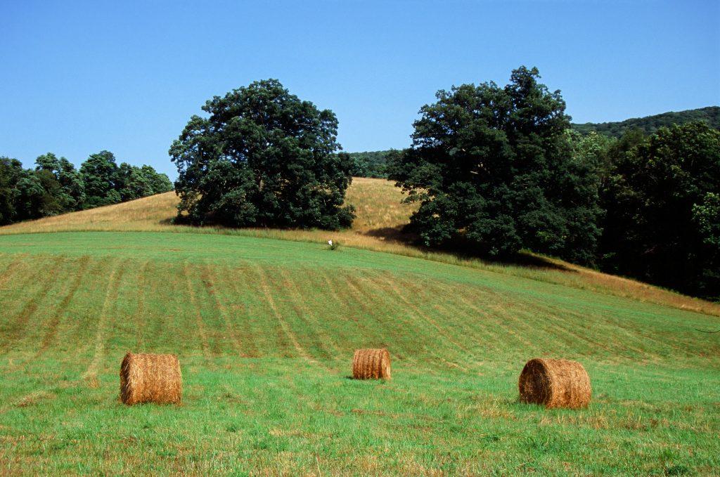 Hay Bales in Bath County, VA- Nikon N65